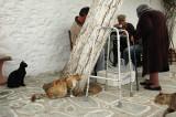 Cats of Folegandros - 3
