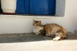 Cats of Folegandros - 5