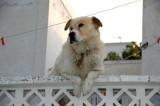 Balcony dog