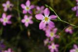 Navarre Beach Wildflowers