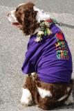 008 - Navarre Beach 2008 Mardi Gras Parade