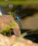 08Fall_1216_Dragonfly.jpg
