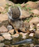 08Fall_1318_Squirrel.jpg