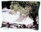 paisaje 1-pollaroid.jpg