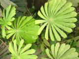 foliage 848