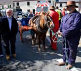 Horse + Cart 1
