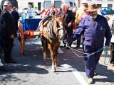 Horse + Cart 2