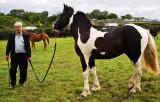 Prize Stallion
