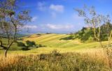 Tuscany Landscape *
