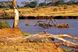 Ewasu Nigra River