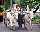 25-Jun ... Bullock Cart, Hyderabad