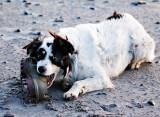 Worried Boot