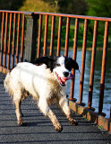 Dog in a hurry