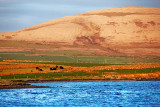 Burren Landscape 2