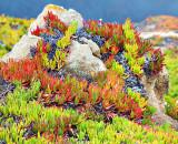 Cliffside Vegetation