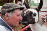 Llama Kiss