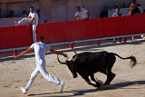 Camargue Bullfighting