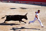 Camargue Bullfight