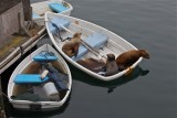 Seals on a boat
