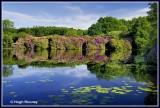 Ireland - Co.Monaghan - Rossmore Forest Park