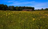 Farm from Lønne, Vestjylland