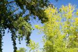 SDIM1235 trees, viewed from motel room