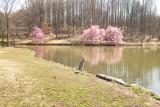 SDIM3518 Blue Heron, Meadowlark Botanical Gardens