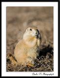 Chubby little Critter ;^)