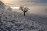 Alone in the coldness ....