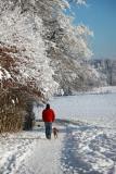 Dog walking in winter