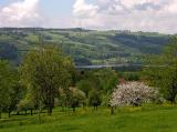 paradise - garden in Hallwil