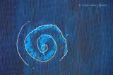 Spiral on Screen Door