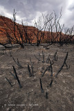 Remains After Desert Forest Fire
