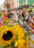 Grafton Street Flowers