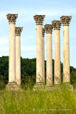 Old Capitol Columns