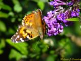 Butterfly2.jpg(119)