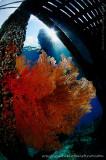 Fish eye photos