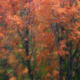 Autumn Returning