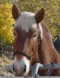 Draft Horses and Visitors