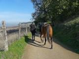 Horse and Walking Rider