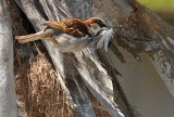 Feathering His Nest