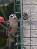 Wild Bird Feeder - a Mouthful