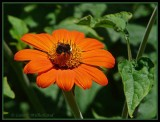 Orange with Bee