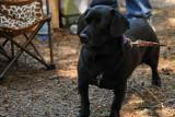 #62 Patty Pup1