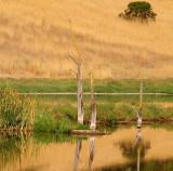 Deadwood Reflections