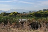 Marsh and Mt. Tam