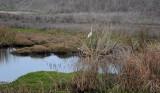 1/12/10: Egret at Pond