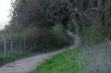 Path Into Trees