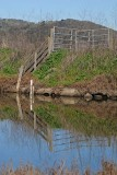 Fence Reflected