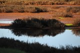 Reflection of Grasses